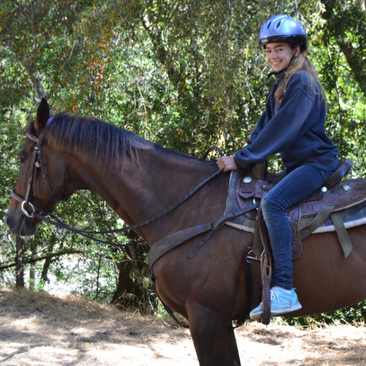 horses-rebecca